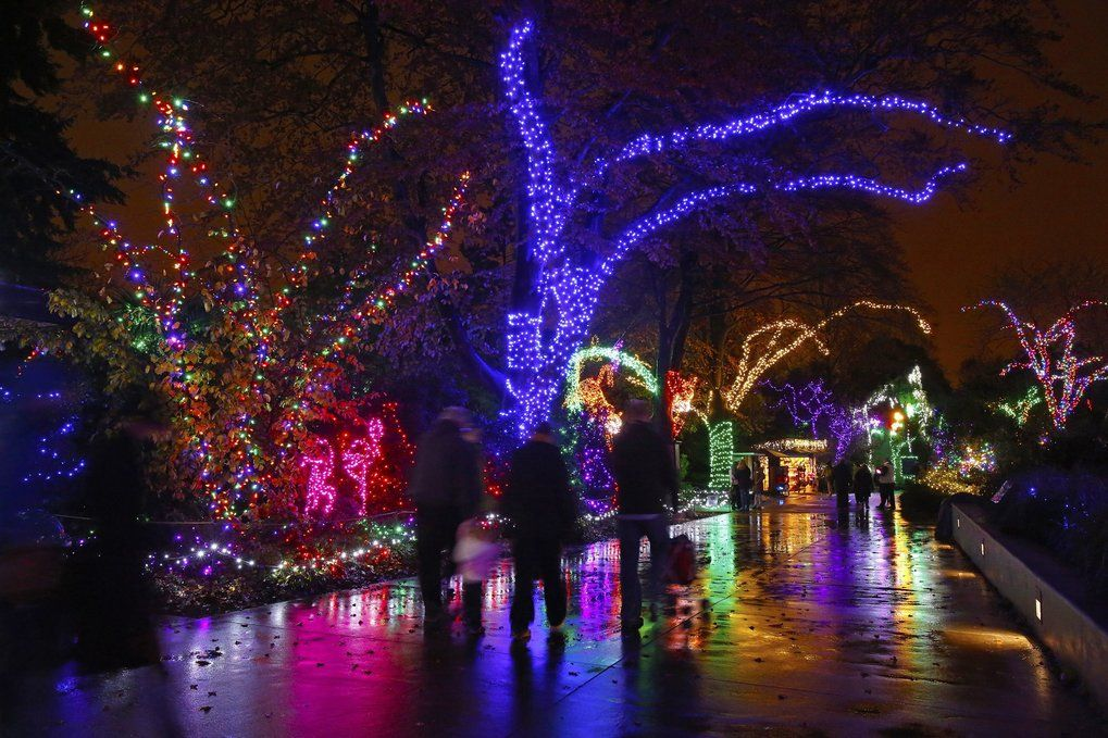 The Best Christmas Lights Are Cheaper Brighter Cleaner Leds Best Christmas Lights Lights Christmas Lights
