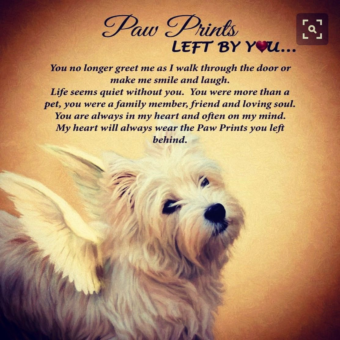 Pin by pogue on westies in pinterest westies dogs and pets