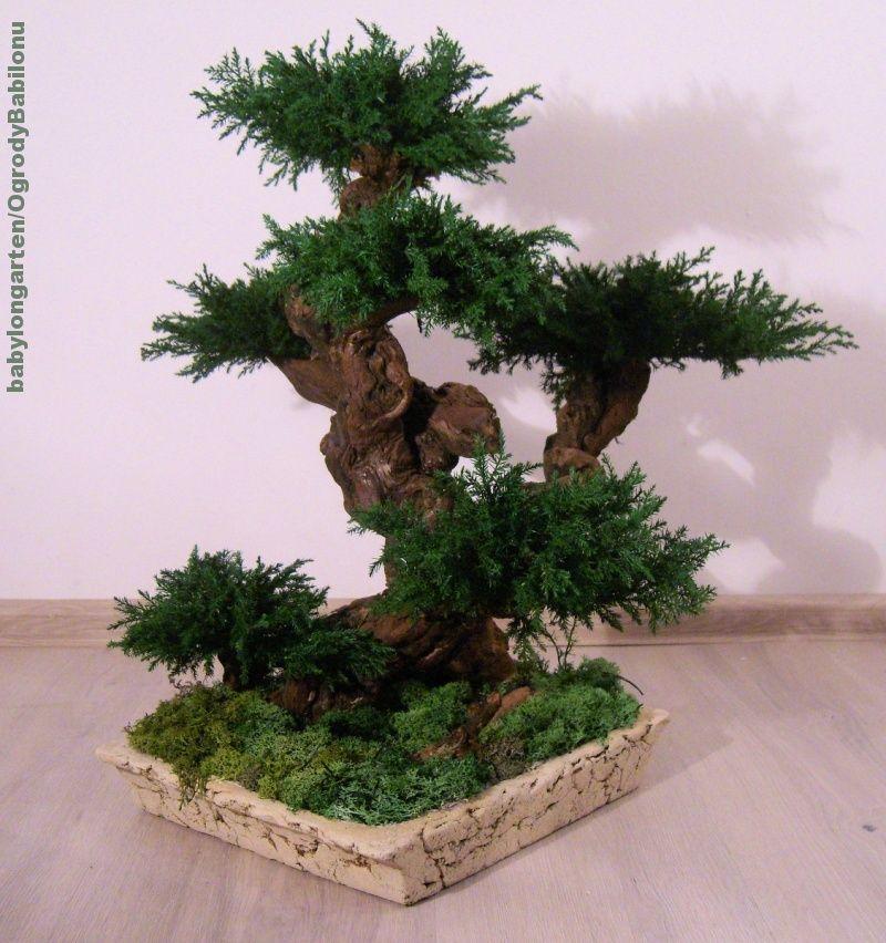 Galeria Zdjec Aukcji Allegro Bonsai Tree Artificial Plants Plants