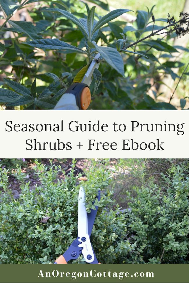 How To Prune Shrubs With Confidence Free Ebook Gardening For Beginners Shrubs Easy Garden