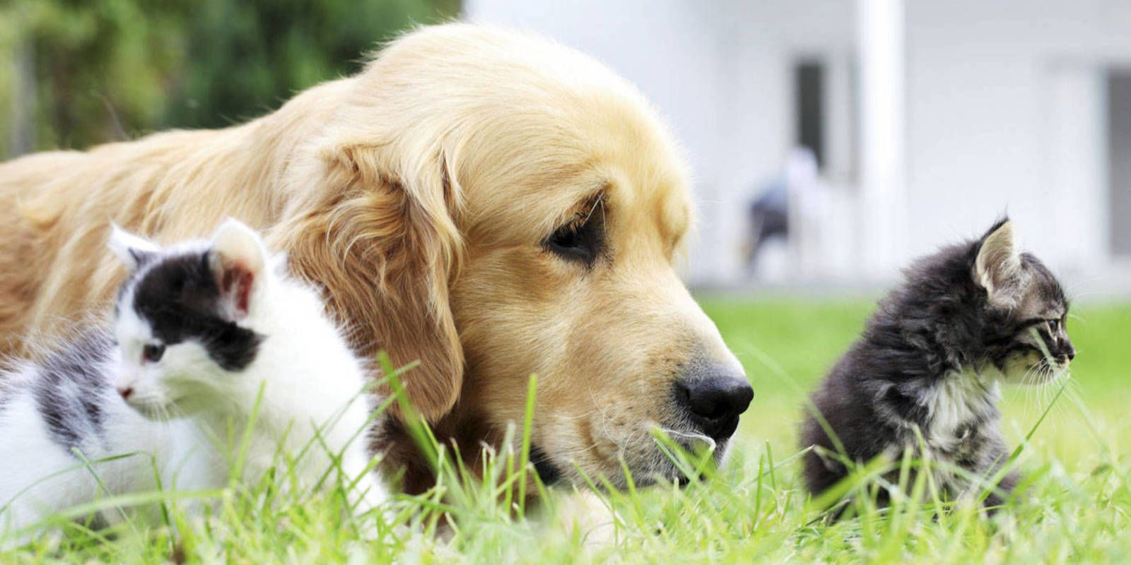 T C S Favorite Pet Names With Images Pet Names For Dogs Pet Names Preppy Dog