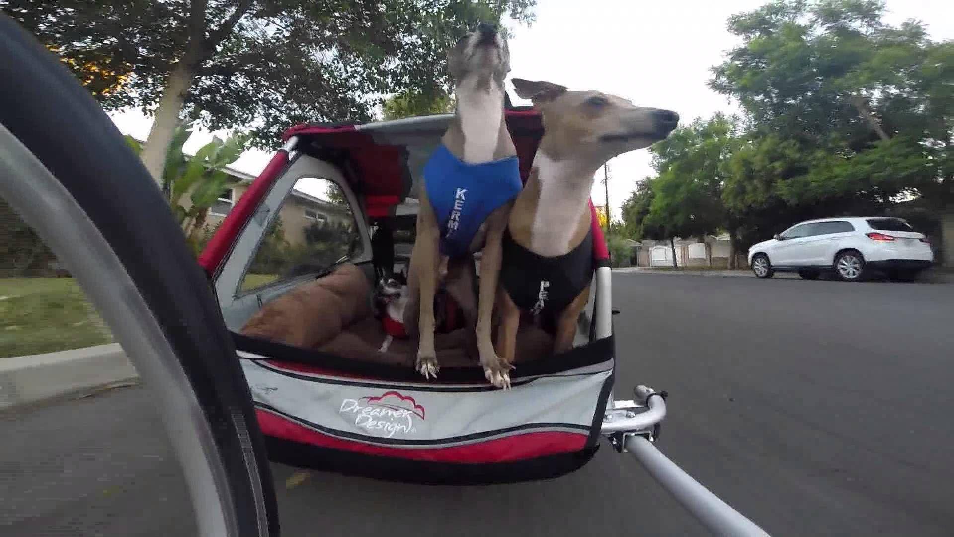 My dogs bike trailer dog bike trailer biking with dog