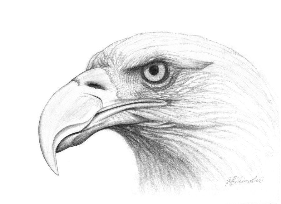 Eagle drawings eagle head pencil drawing bald eagle head by badbats