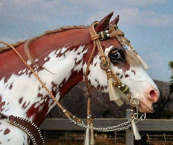 realistic horse breeds # 46