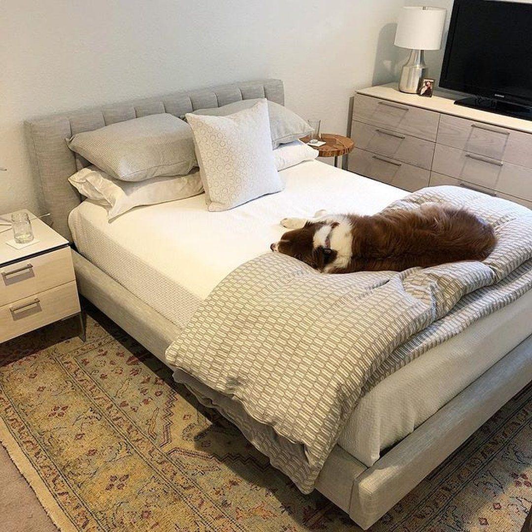 tuckerjamesaussiedog's instagram image Cheap bedroom