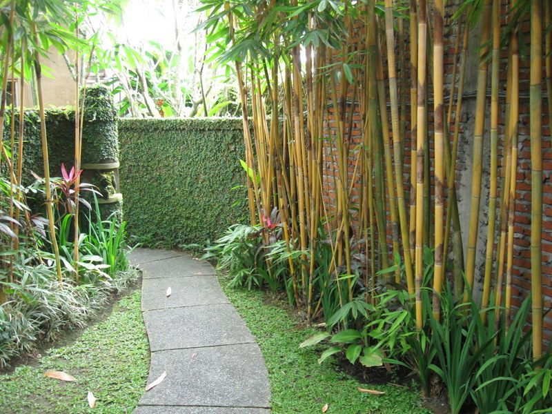 Use bamboo along side garden Effective and serves as privacy