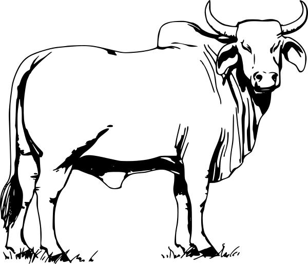 http images clipartpanda com bull clipart brahman bull png rh pinterest com ball clipart bully clip art free