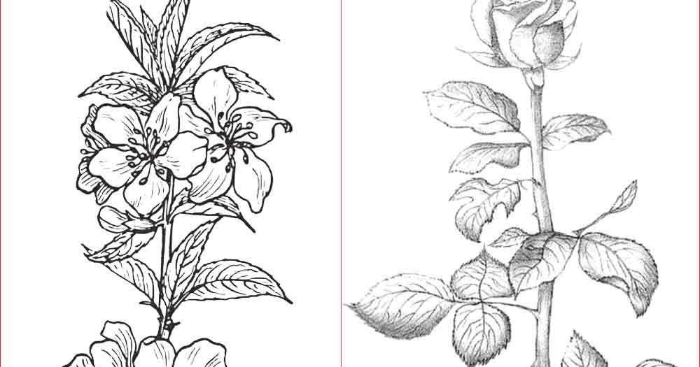16 Sketsa Gambar Bunga Yang Mudah Digambar Download 61 Koleksi Gambar Bunga Cantik Dan Mudah Digambar Download Pal Gambar Bunga Sketsa Bunga Lukisan Bunga