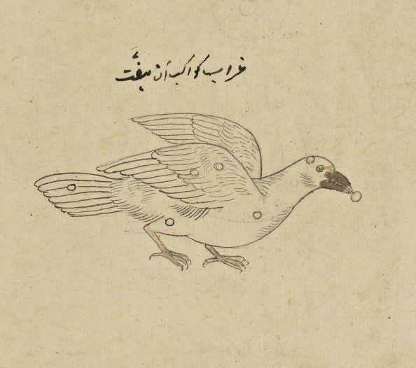 manuscrits arabes s rie d 39 images indiennes qui devaient servir l 39 illustration du trait sur. Black Bedroom Furniture Sets. Home Design Ideas