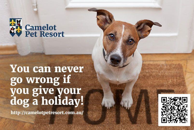 Best Luxury Dog Boarding Kennels In Perth Camelot Pet Resort