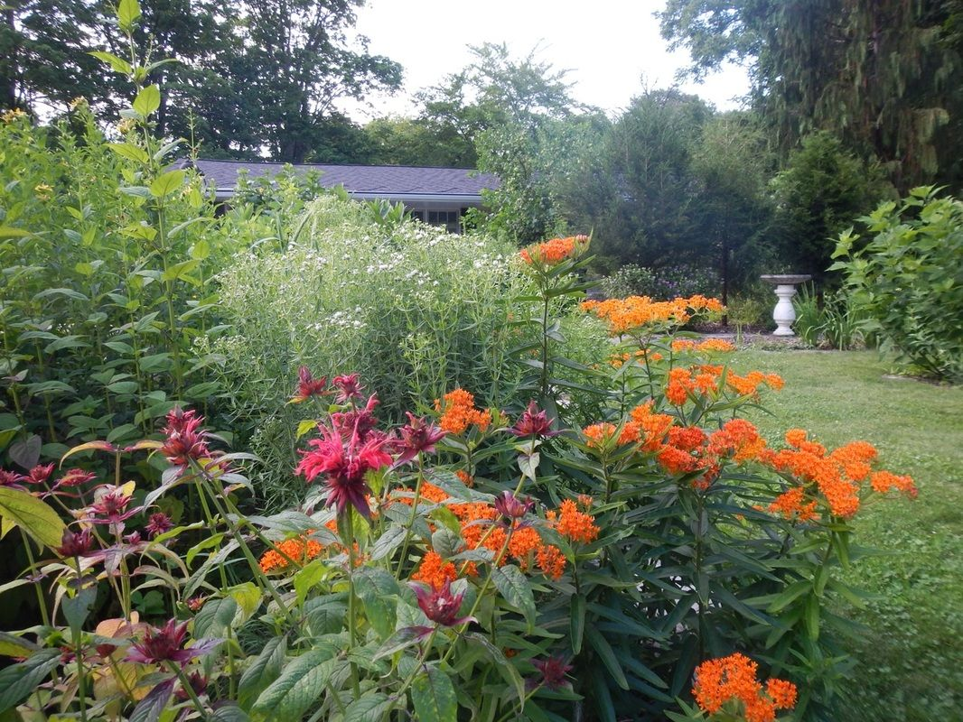 A biodiversity garden is a native plant garden is a for Native garden designs