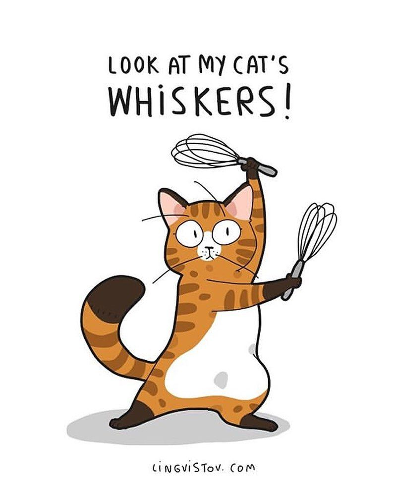 Lingvistov Com Lingvistov Cat Catsofinstagram Lovecats Instacats Instagramcats Ilovecats Petsofinstagra Cat Quotes Funny Funny Doodles Cute Cat Quotes