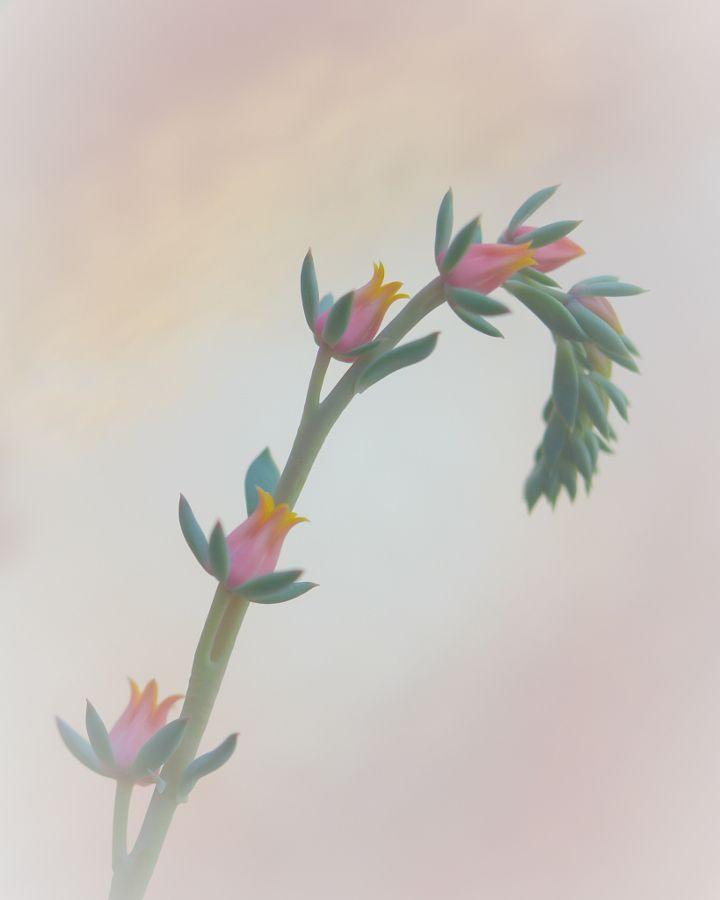 Essence by Leah McCoy Soderblom