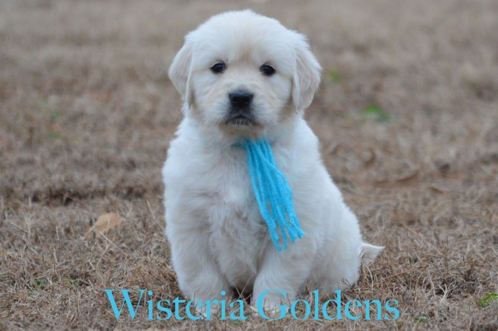 Teal Girl 6 Weeks Picture Sunny Ego Litter Born 11 2 14 6 Girls