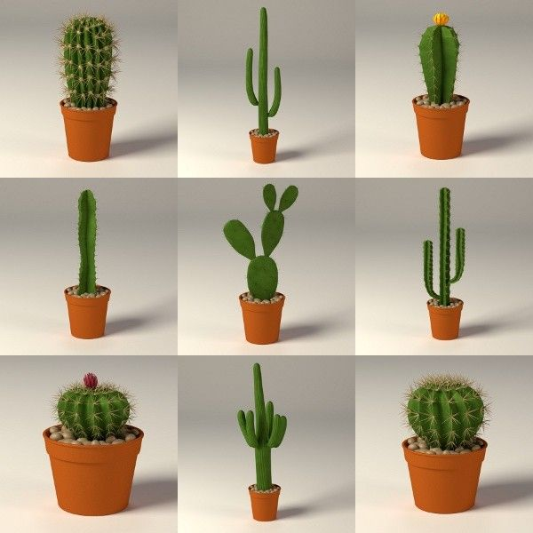 cactus in pot google search green extreme pinterest discover best ideas about cacti. Black Bedroom Furniture Sets. Home Design Ideas
