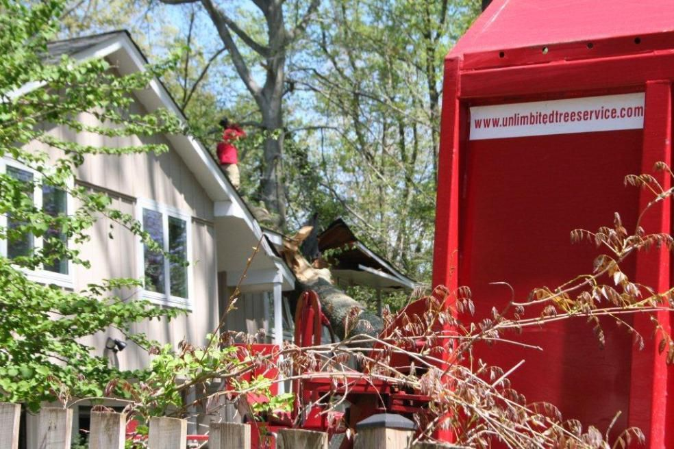 Tree Removal, Tree Service Towson, Maryland