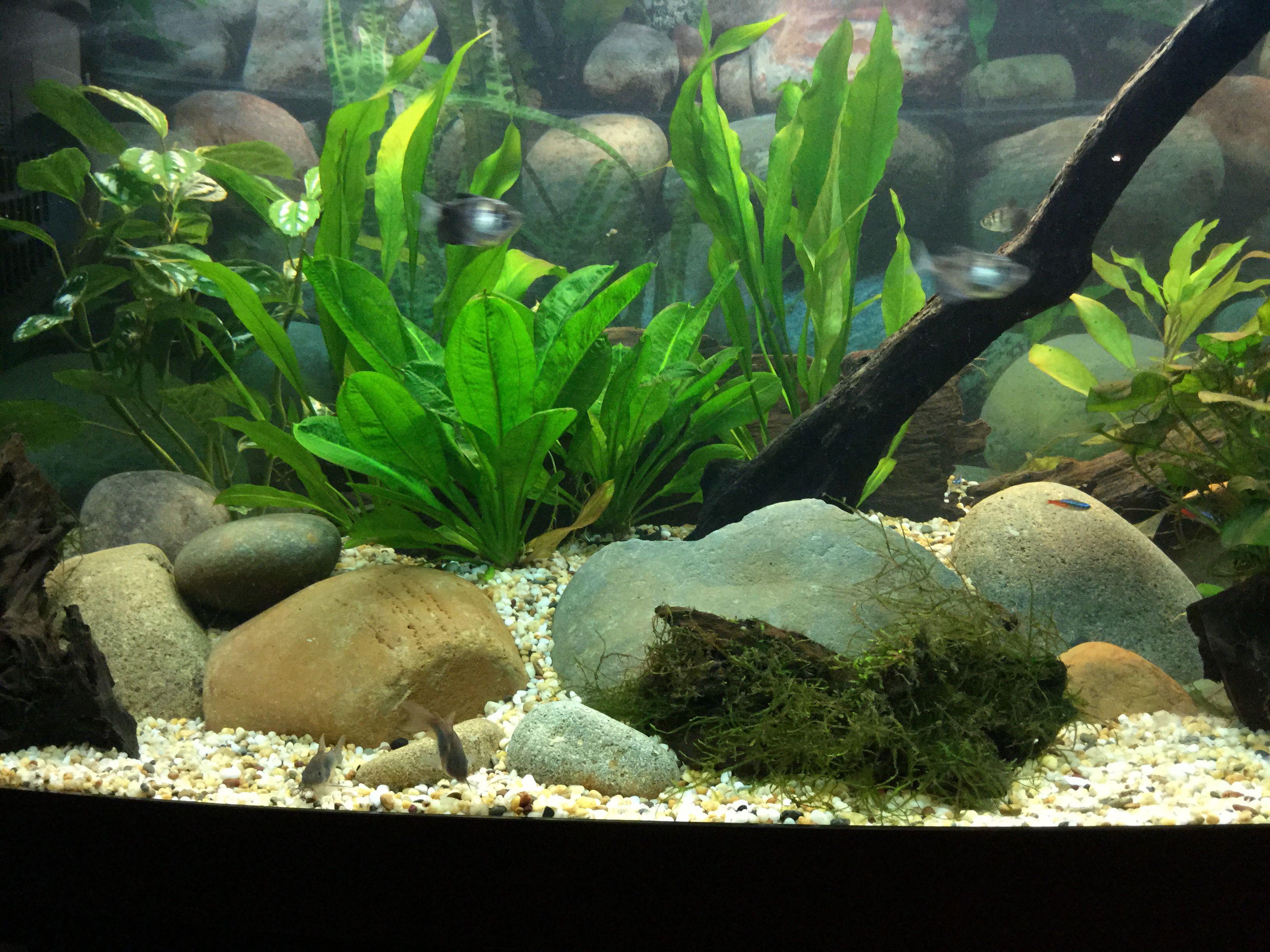 503 Service Unavailable Aquascape River Rock Plants