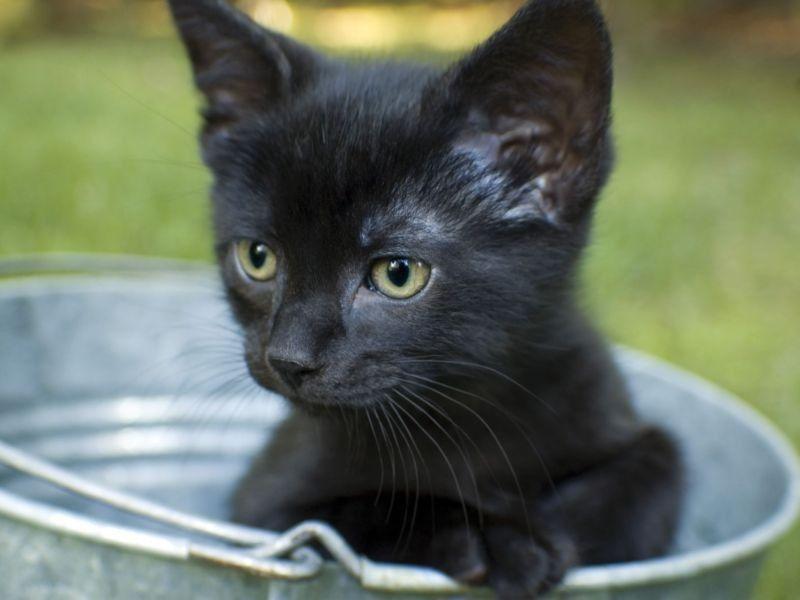 Zehn Schwarze Katzenbabys Zum Verlieben Katzenbabys Katzen Tiere