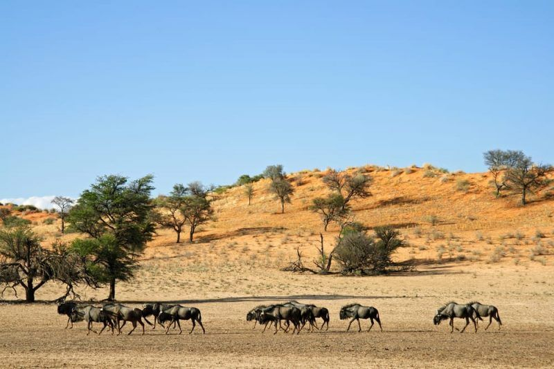 Desiertos Desierto Paisajes Deserticos