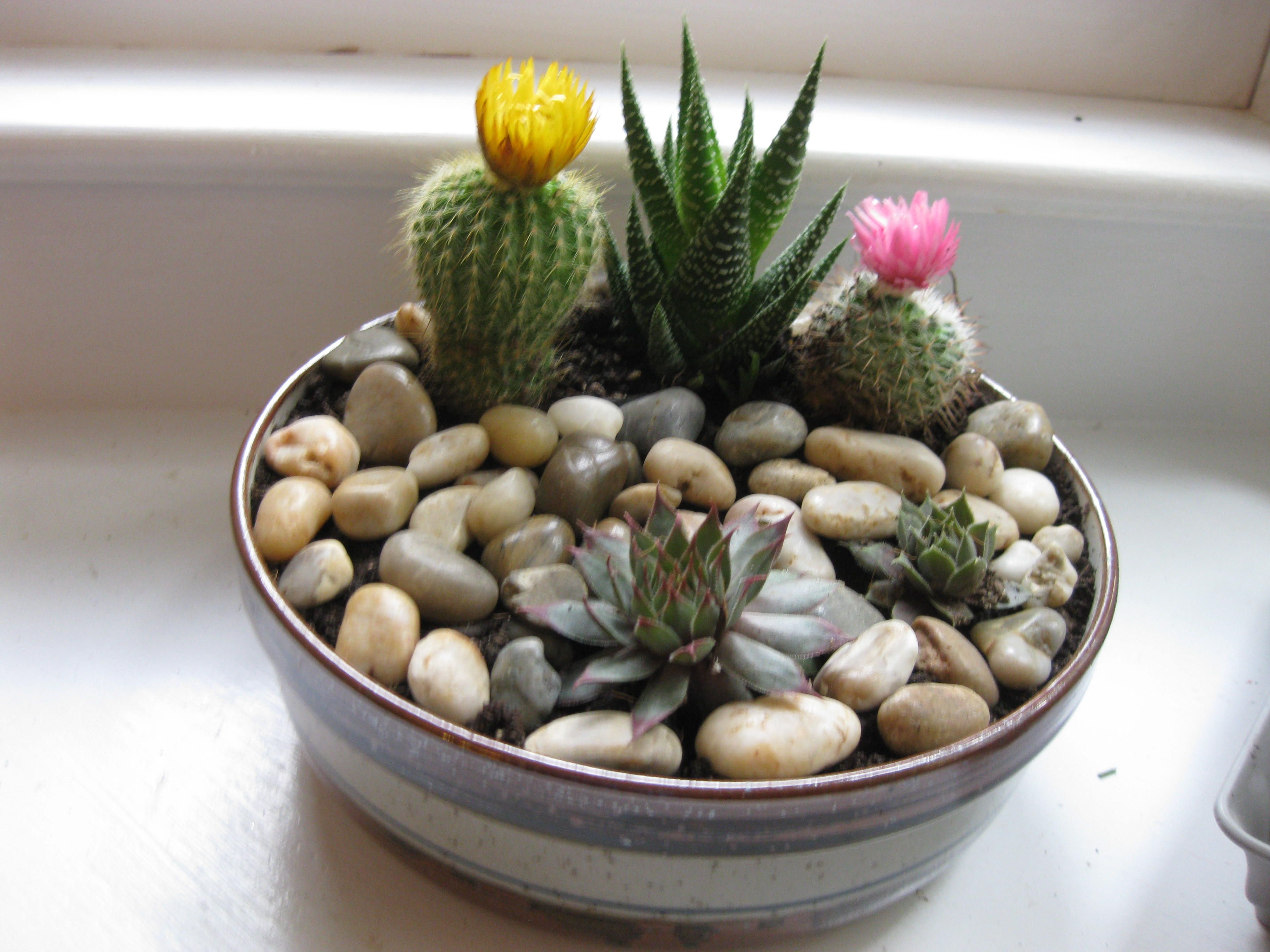 DIY rock garden. Made from thrift shop noodle bowl and ... Ze Plant At Home Depot on plants with white flowers, plants at ikea, plants at kroger, plants at tj maxx, plants under evergreen trees, plants at kmart, plants at harris teeter, plants at publix, plants at sam's club, plants that repel bugs and pests, plants at homegoods, plants that repel mosquitoes, plants inside home, plants at safeway, plants at disney, plants at michaels, plants at office depot, vines depot, plants at cvs, plants at menards,