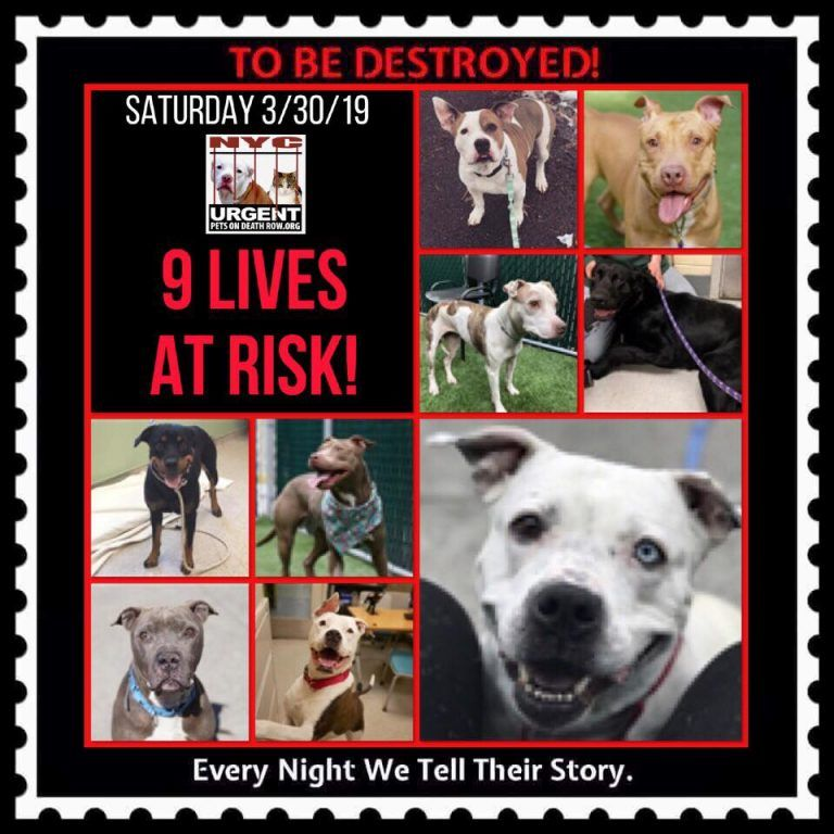 DOGS TO BE DESTROYED 03/30/19 Dogs