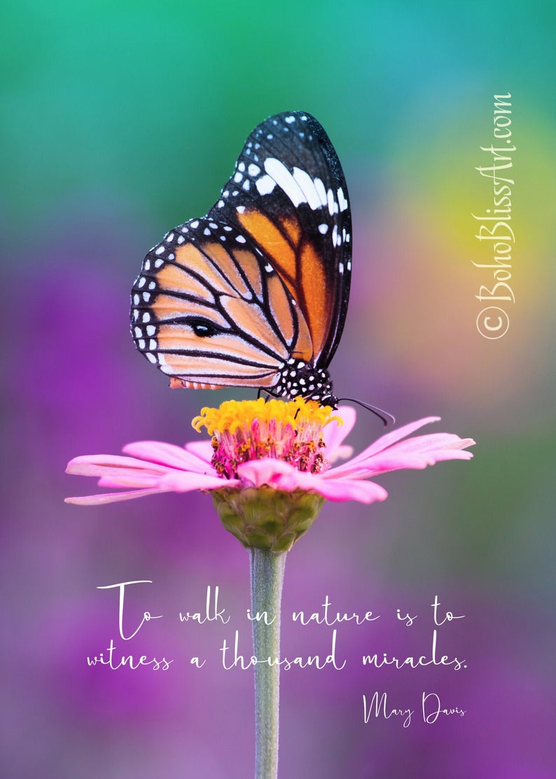 Mary Davis Quote To Walk In Nature Is To Witness A Thousand Miracles Nature Art Print Tree Hug Monarch Butterflies Photography Walking In Nature Nature Art
