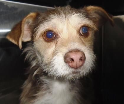 Update Macaroni S Current Status Is Unknown Macaroni Located In