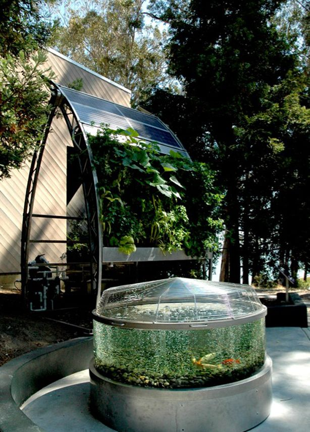 1000 images about Aquaponic on Pinterest Raising Front stoop