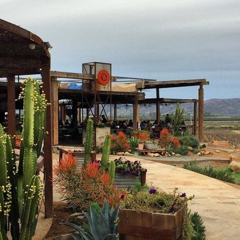 17 restaurants in the Valle de Guadalupe and Ensenada to try before you die