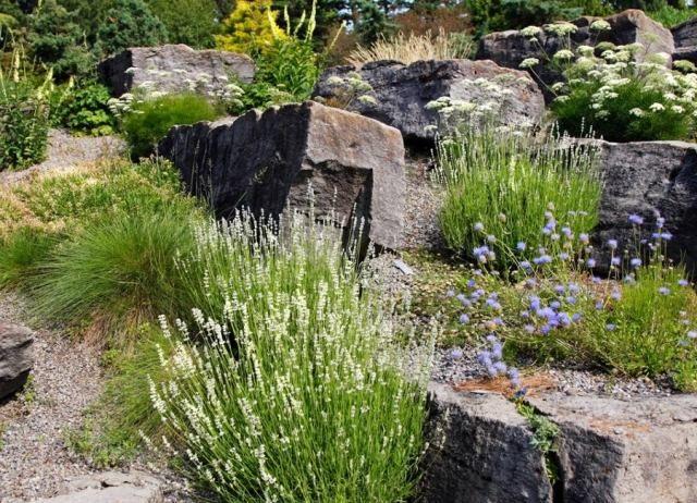 Steingarten anlegen ziergräser stauden blühen weiß blau - ideen gestaltung steingarten hang