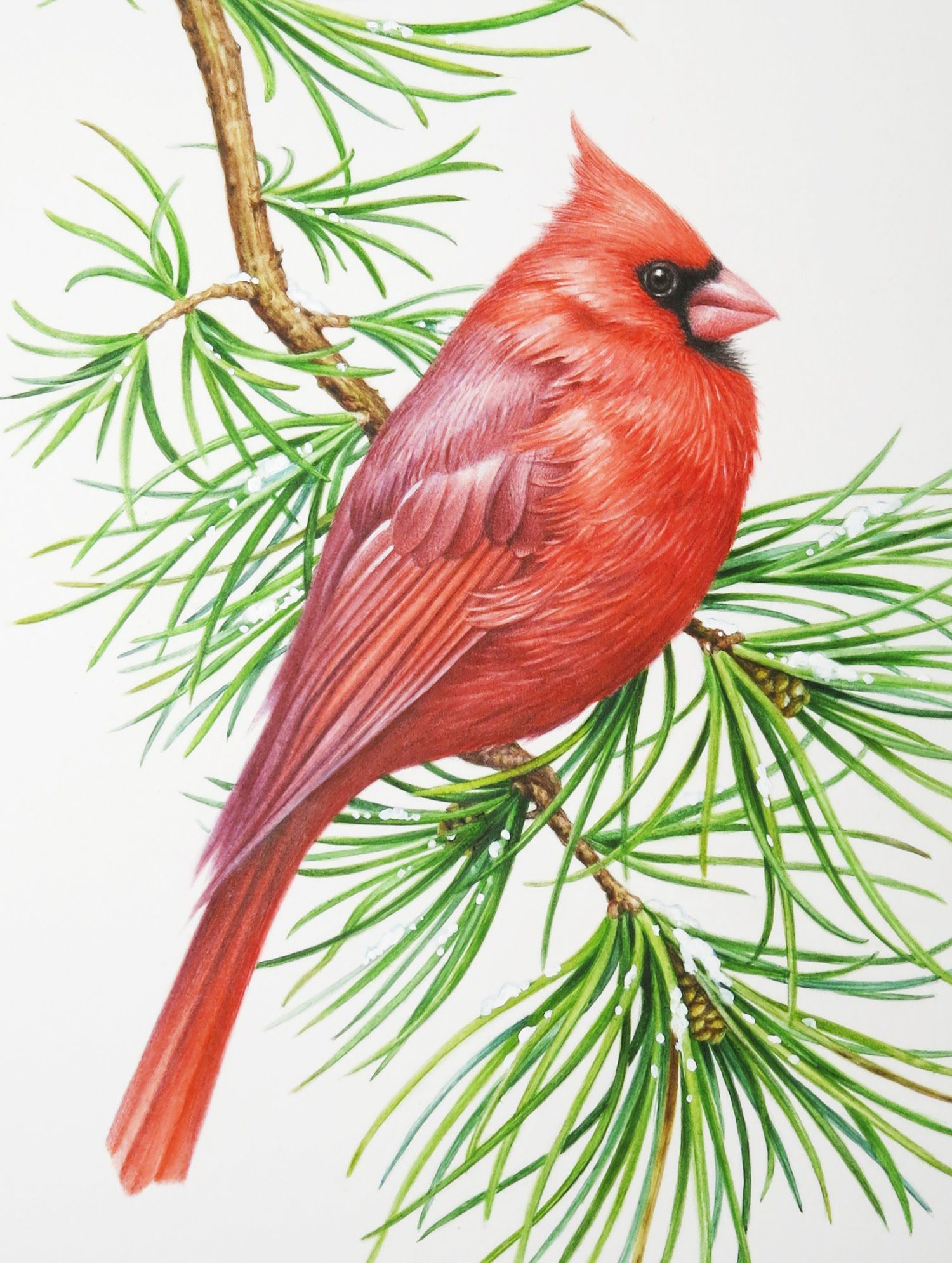 3d0413e20 Here is a fat little winter cardinal painted with watercolor!