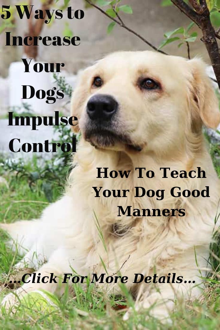dog behaviorist dog behavior training dog behaviorist