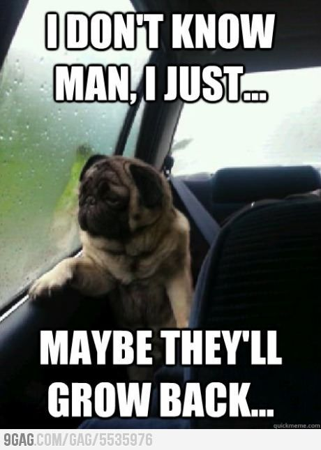 After He Was Neutered Funny Dog Memes Funny Dog Pictures Pug Memes