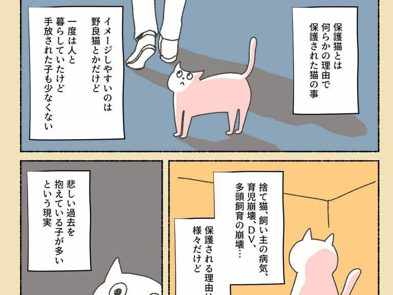 初めはペットショップに猫を探しに行った女性 しかし 虐待を受けていた保護猫に出会い Grape グレイプ ペットショップ ペット 猫