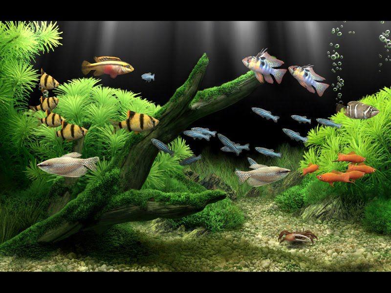 Fondos De Escritorio 3d Con Movimiento Gratis Aquarium Screensaver Aquarium Tropical Fish Aquarium
