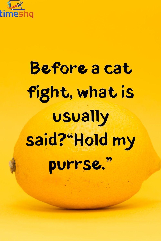 Unny Cat Jokes Funny Cat Jokes Really Funny Joke Cat Quotes Funny