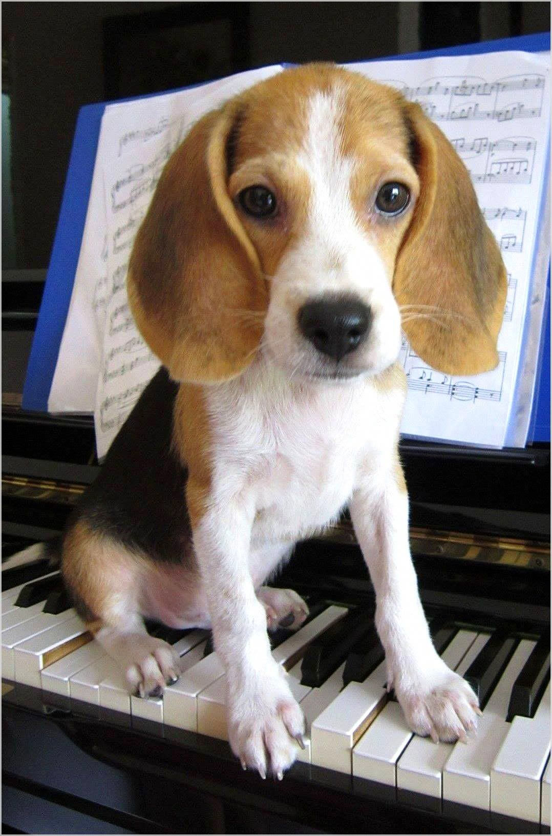 The Importance Of Keeping Your Dog Mentally Stimulated Beagle