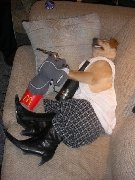 Dog had an hangover