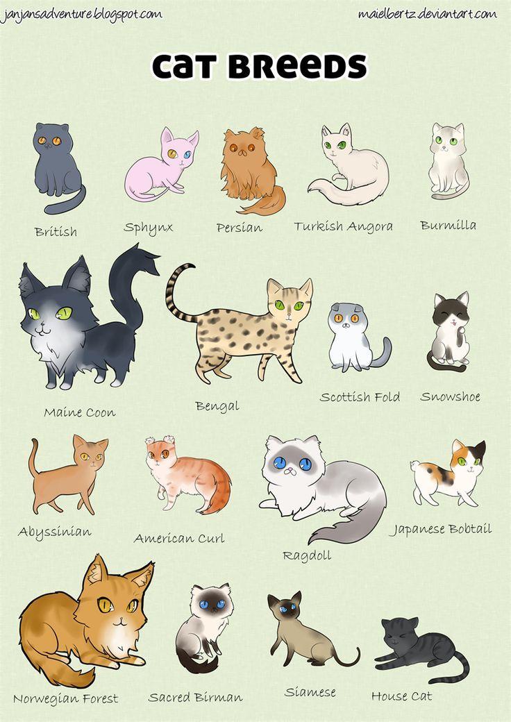 Cat Breed Poster By Maielbertz Devian Cat Breeds Cat Care Pets