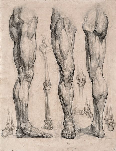 drawing mens legs join us http://pinterest.com/koztar/ | Anatomy ...