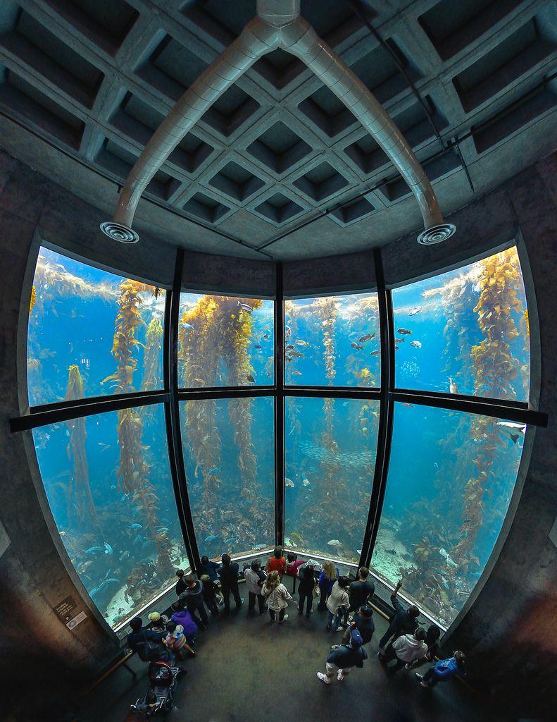 Travelingcolors Monterey Bay Aquarium Travel Around The World California Cool