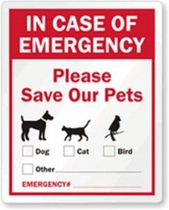 Protecting Pets in Natural Disaster - The Steve Shannon Collection