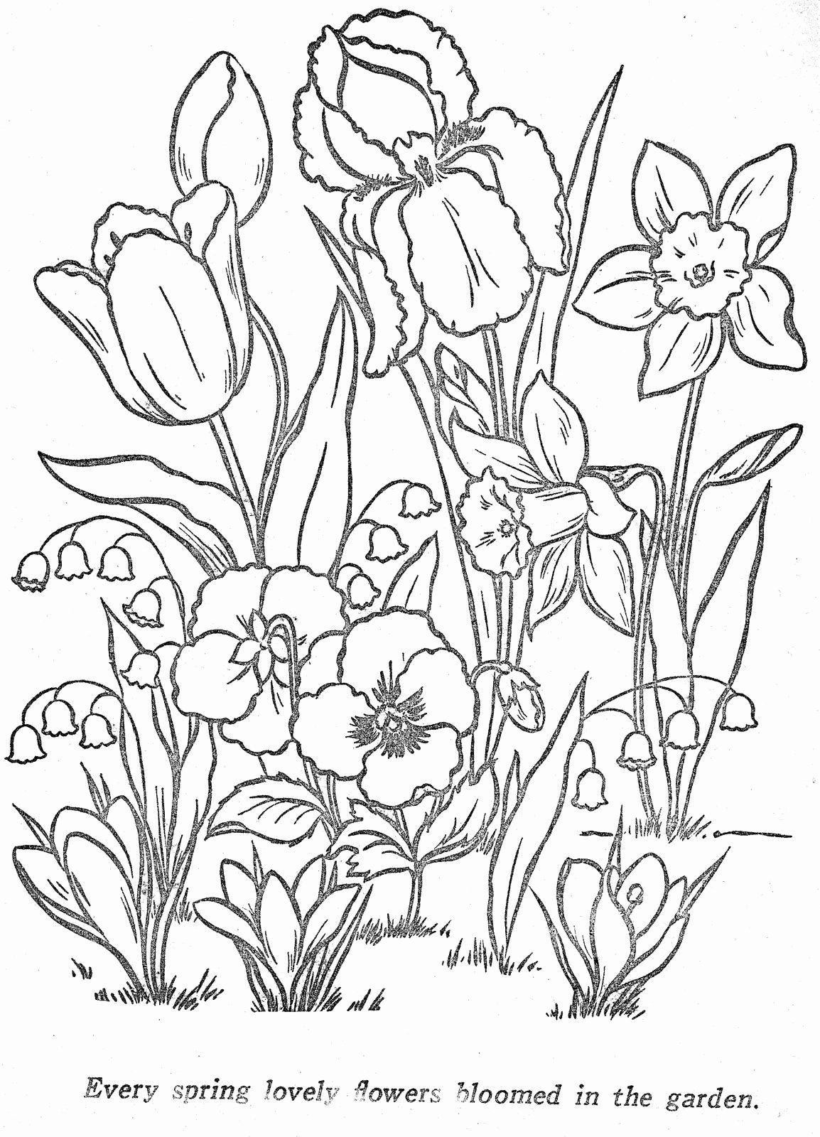Pin By Christina On Coloring Pages Flower Coloring Pages Coloring Pages Flower Drawing