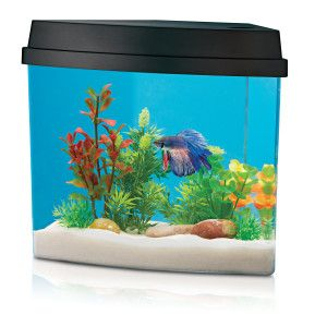 Add Beauty To Your Home Decor With A Tranquil Freshwater Environment From National Geographic Petsmart 24 99 Small Pets Aqua Oasis Cute Pictures