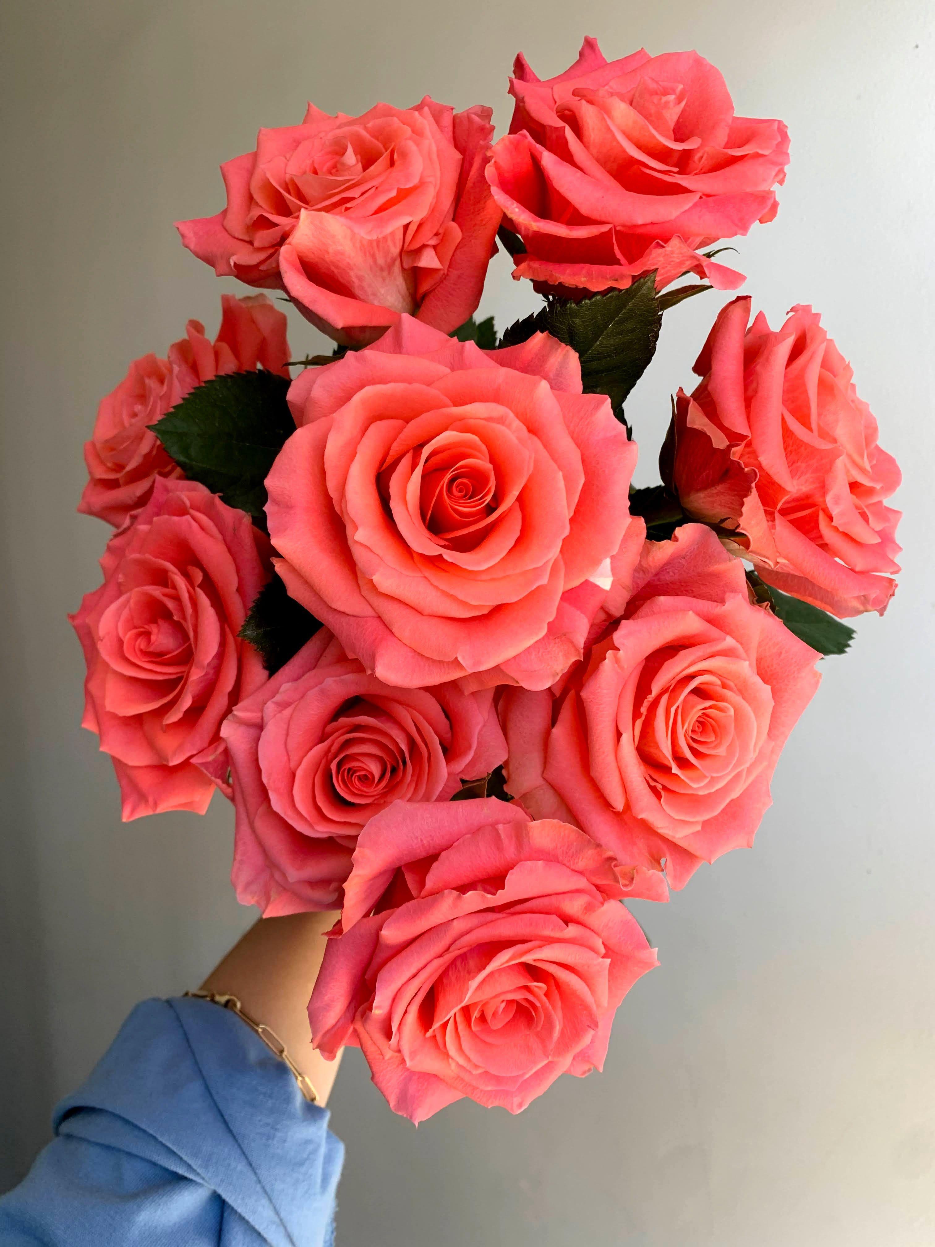 Amsterdam Roses In 2021 Coral Flowers Pretty Flowers Rose Varieties