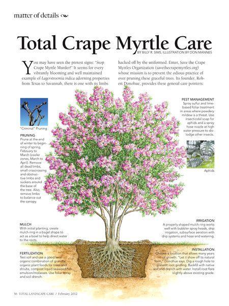 Tlc February 2012 Myrtle Tree Landscaping Plants Crepe Myrtle Trees