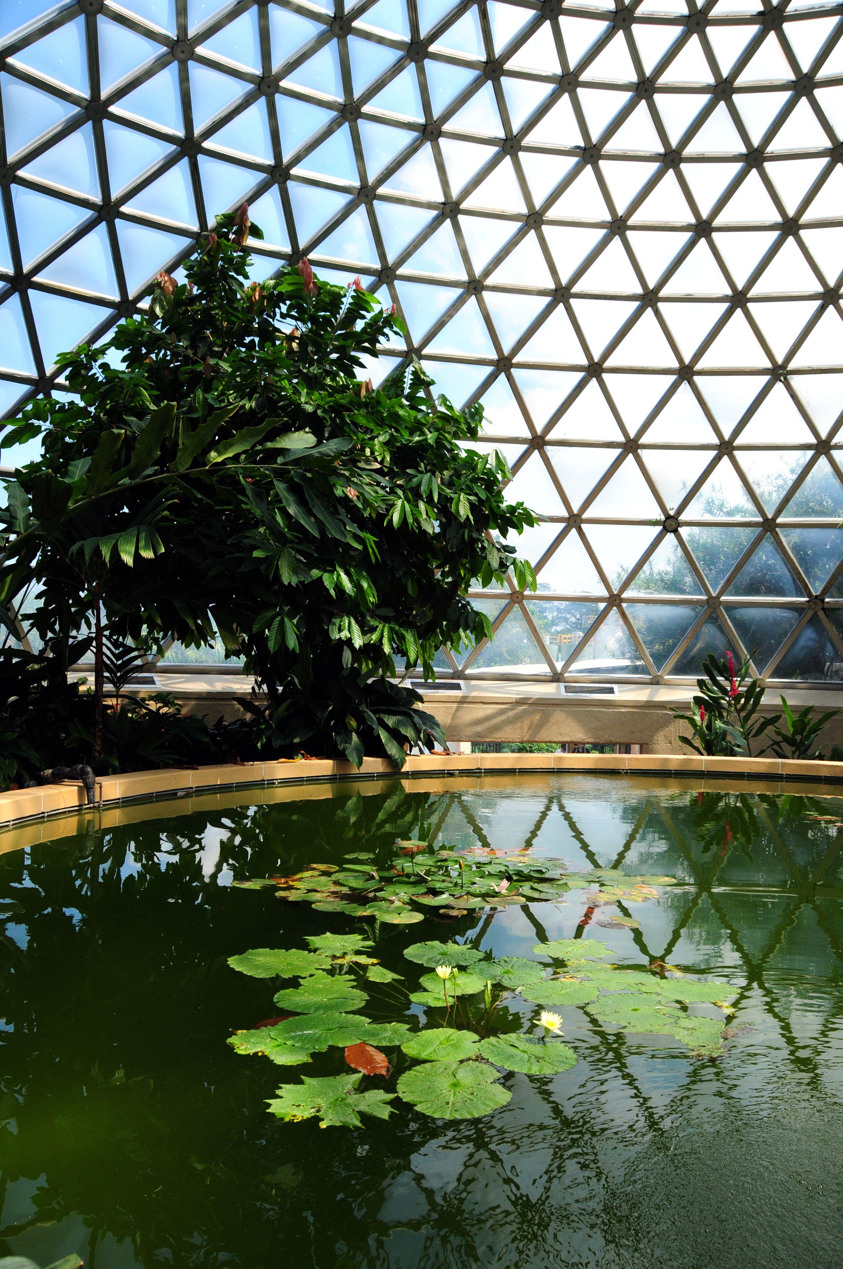 Arboretum, Mt Cootha Botanical Gardens, Brisbane