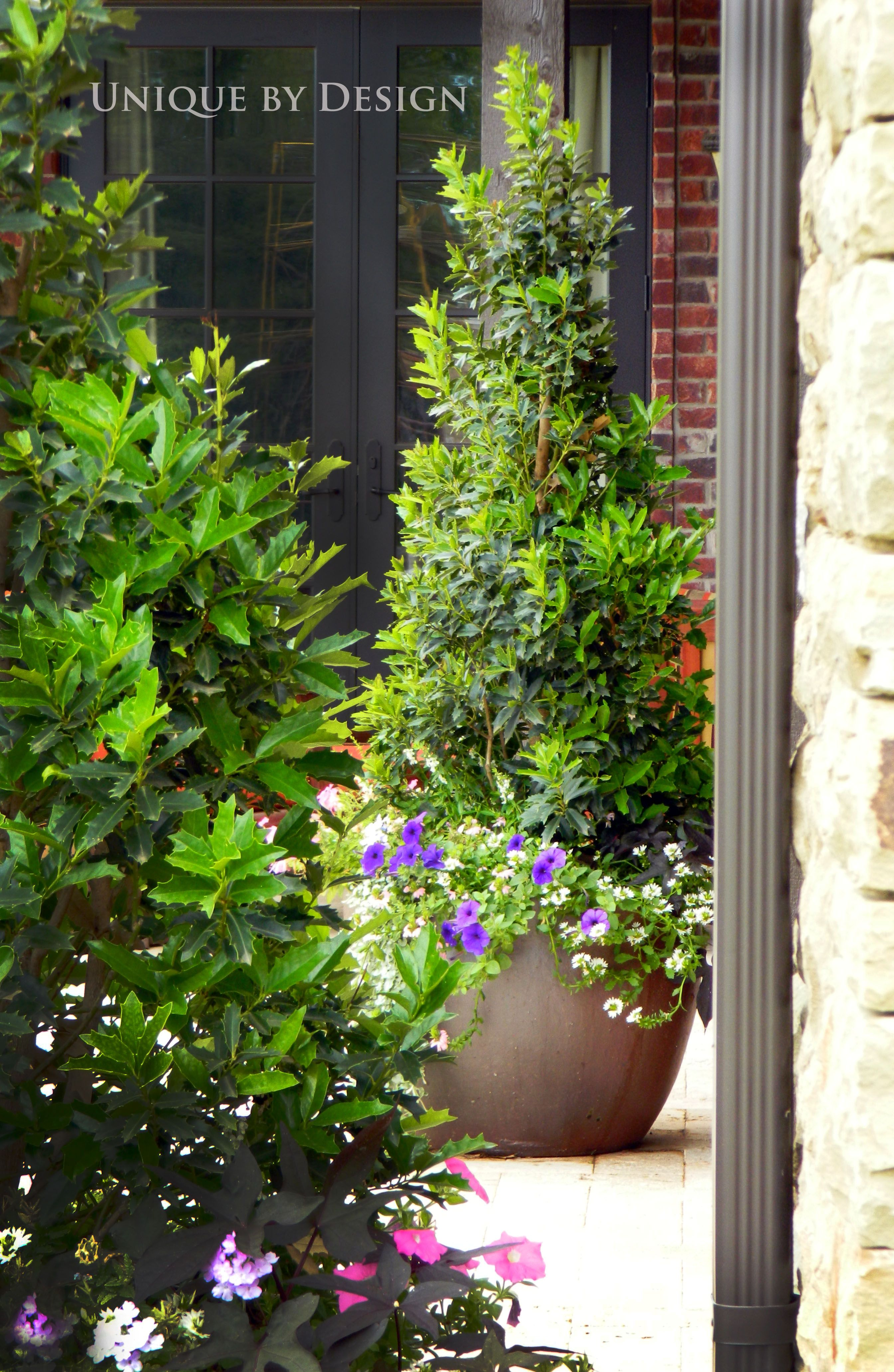 Tall, skinny and pointed shrubs in planter pots left and