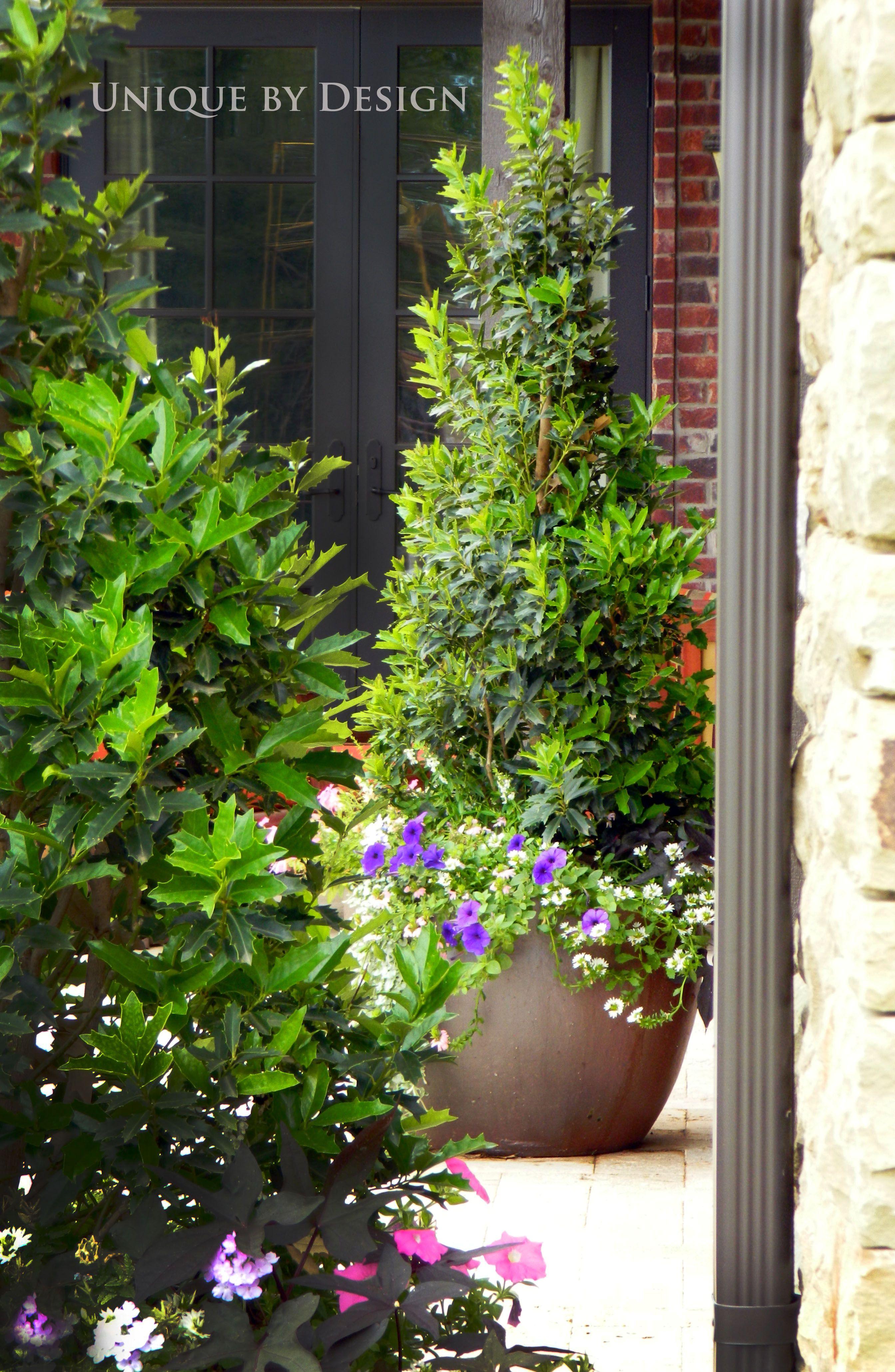 Pin Von Big Name Llc Auf Midtown Mediterranean Topf Und Kubelpflanzen Pflanzen Gartencontainer