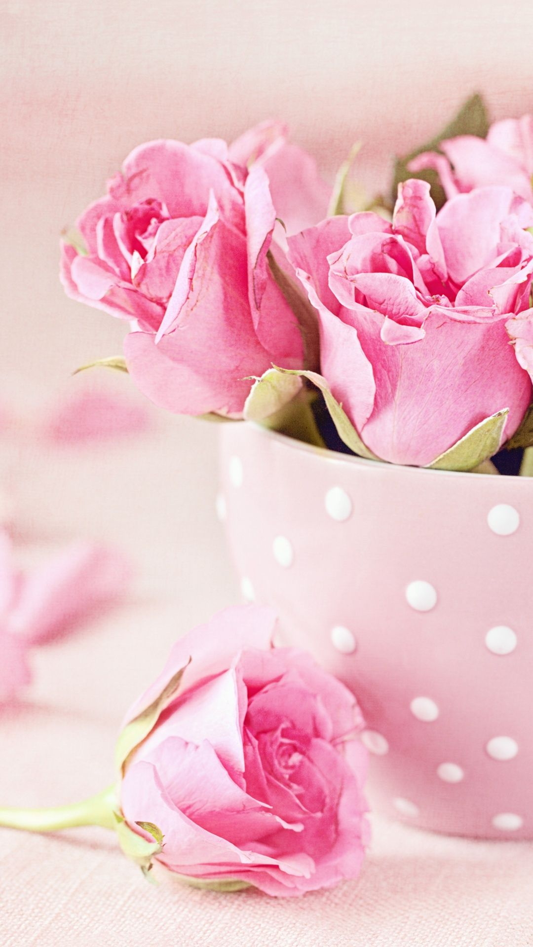 Pink Roses Cup Bouquet Wallpapers Pink Roses Rose Flower Wallpaper